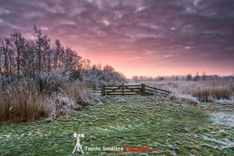 Taede Smedes_Winter_zonsopkomst_Eernewoude_Garijp-Fotografy_Fryske Gea_Alde Feanen