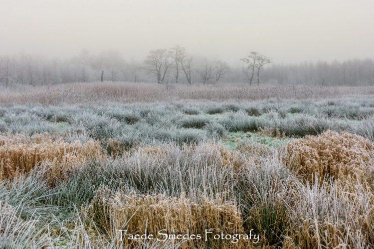 Taede Smedes_fotografie_landschap_natuur_garijp_eernewoude_pettebosk