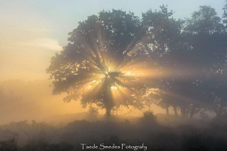taede smedes, fotografie, garijp, landschap,mist, zonneharp