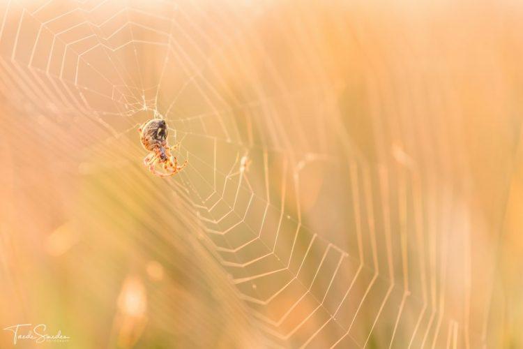 Taede Smedes, landschapsfotograaf, alde feanen, spin in web, garyp, garijp, natuurfotografie