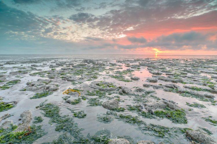 Taede Smedes, fotografie, natuur, landschap, het wad, moddergat, zonsopkomst, garyp