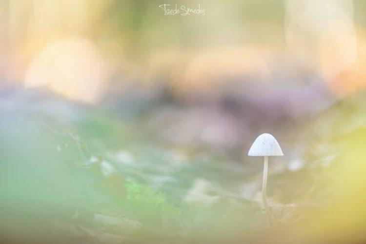 taede smedes, garyp, fotografie, natuur, macro, paddestoel, alde feanen, dreamscapes