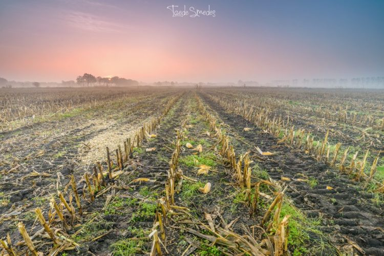 Taede Smedes, Garyp, maisveld, zonsopkomst landschapsfotografie