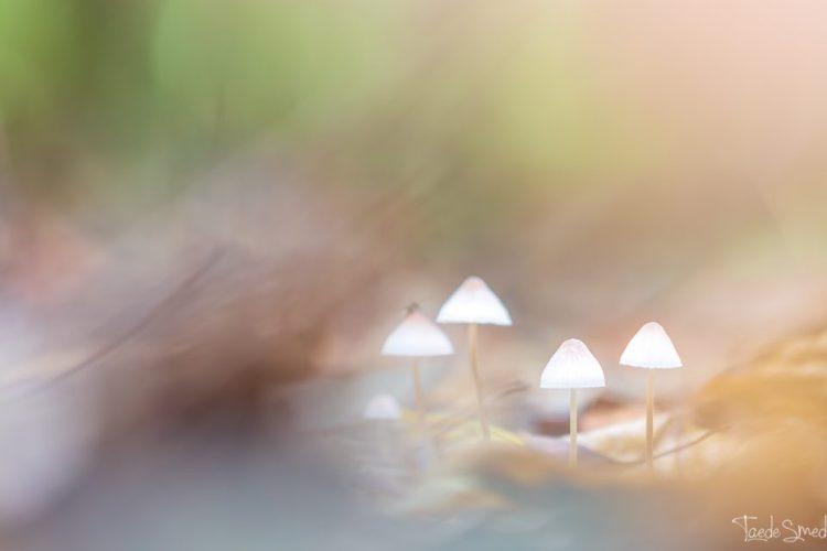 taede smedes, garyp, natuurfotograaf, landschapsfotograaf, foto friesland, paddenstoel, macrofotografie