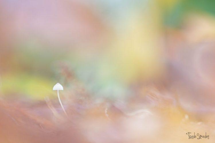 Taede Smedes, Garyp, taede smedes fotografie, paddenstoel, herfts
