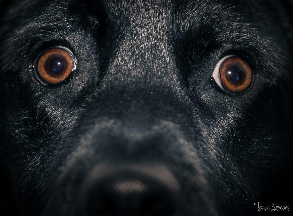 Taede Smedes, Fotograaf friesland, garyp, garijp, huisdierfoto