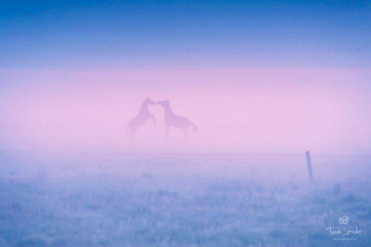 Taede Smedes, Garyp, Fotografie, Mist, Paarden, Zonsopkomst