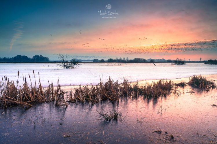 Taede Smedes Garijp, Landschapsfotografie, Winter, Alde Feanen