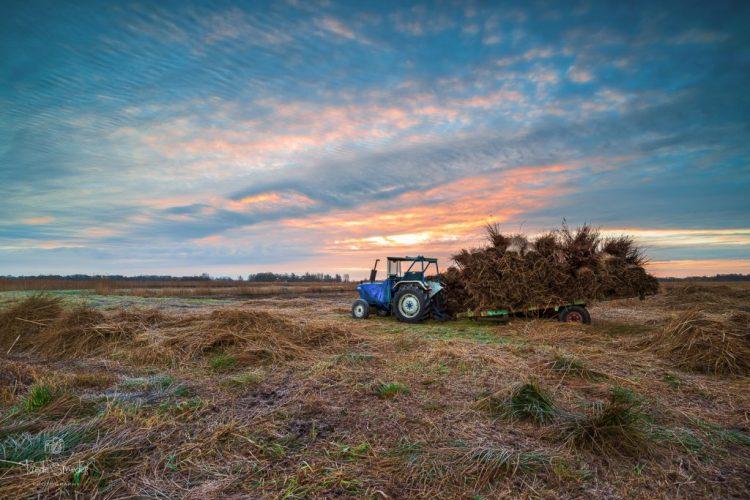 taede smedes, landschapsfotograaf friesland, alde feanen, rietsnijder