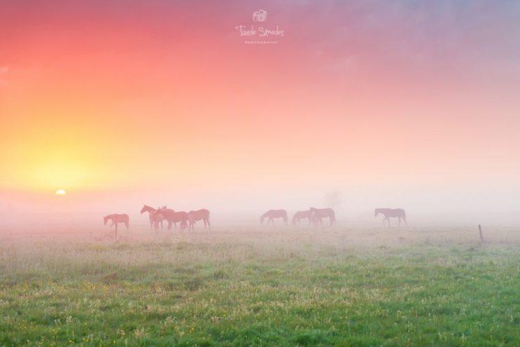 Taede Smedes, Fotograaf Friesland, Mist, Landschapsfotograaf, Alde Feanen